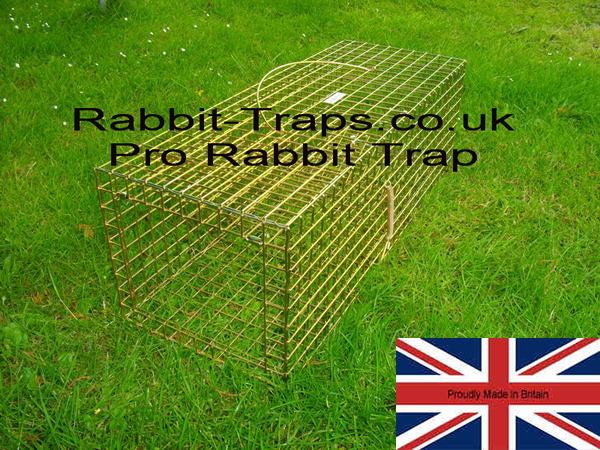 how to catch a rabbit in a live trap