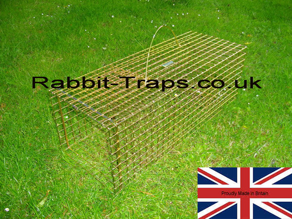 Rabbit Trap should always be sited as soon as damage is spotted